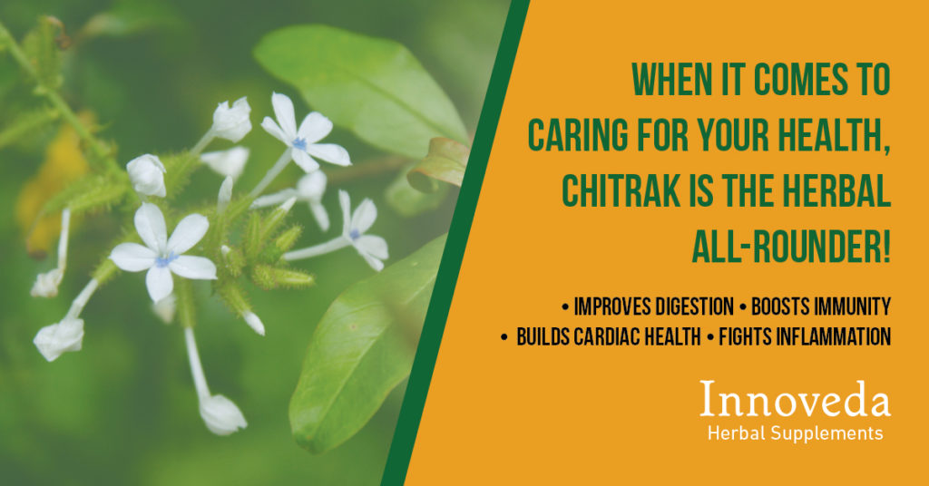 Benefits of Chitrak/ Plumbago zeylanica