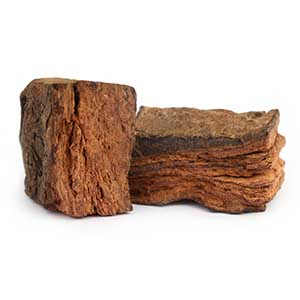 Acacia catechu bark herbal supplement