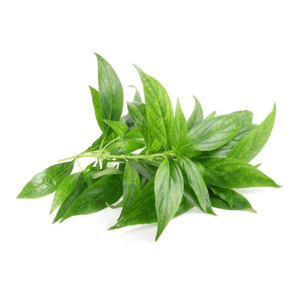 Andrographis paniculata herbal supplement