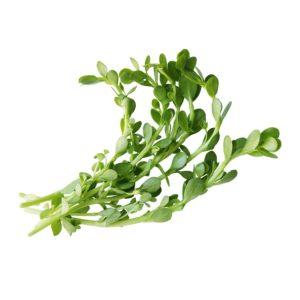 Bacopa herbal suupplement