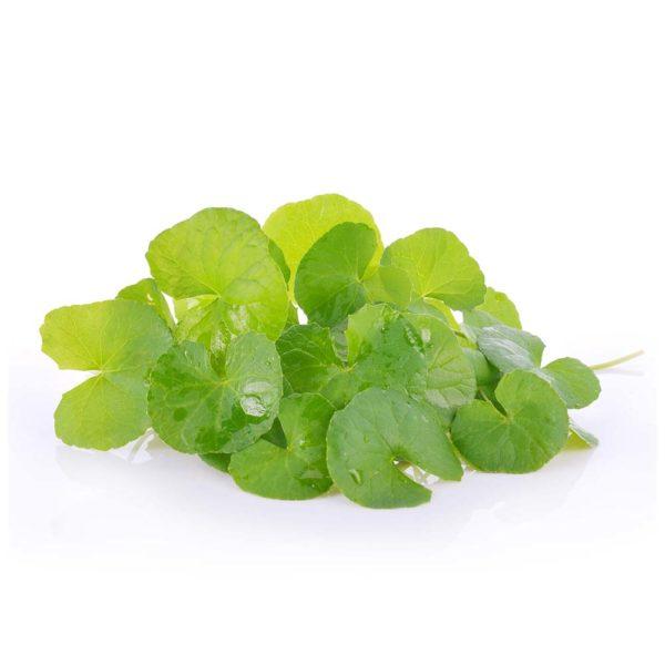 Centella asiatica herbal supplement