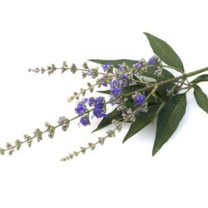 Chaste tree herbal supplement