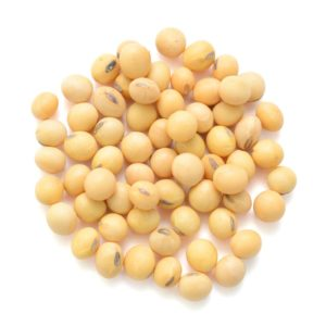 Glycine max Soya Bean Seed herbal supplement