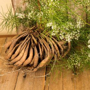 Shatavari herbal supplements