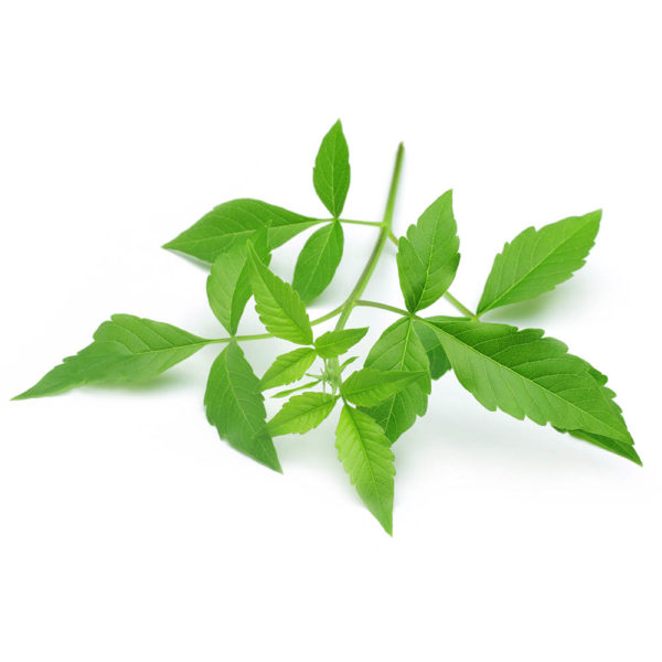 Chinese Chaste Tree Herbal Supplement